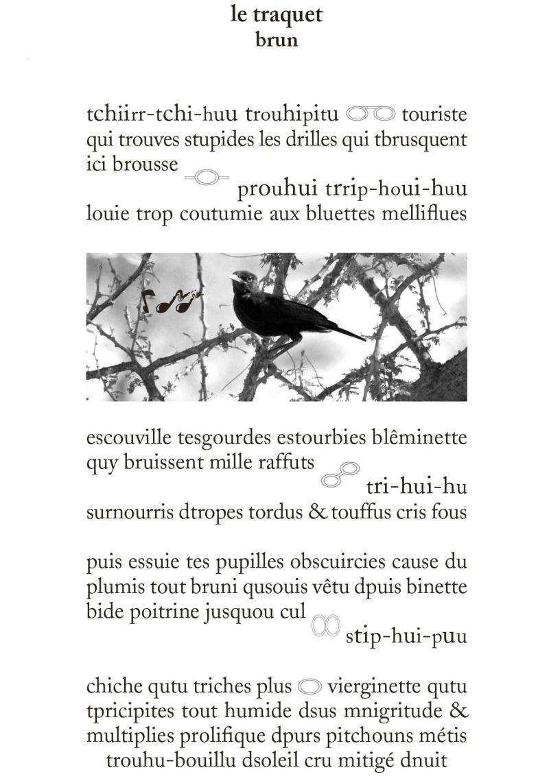 Traquet (002)