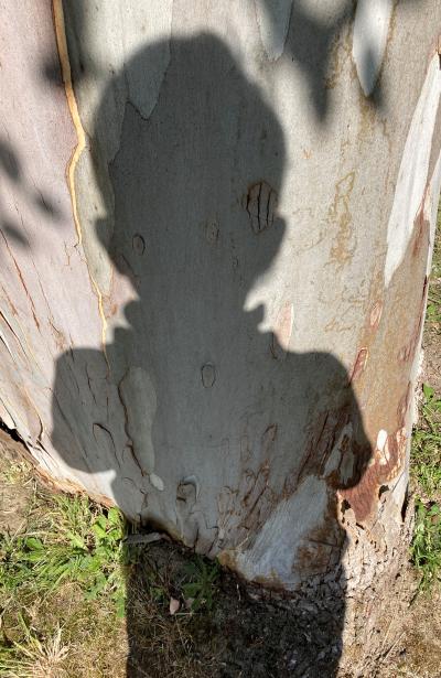 Ombre à l'eucalyptus