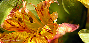 Fleur_char_janvier_05_copie
